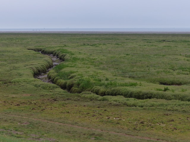 Tidal creek on the salt marsh