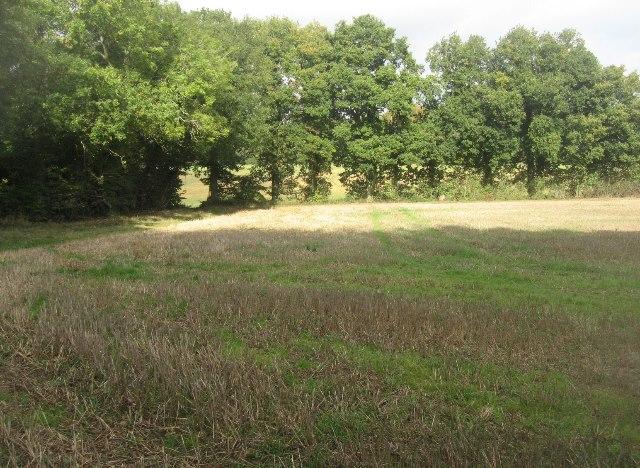 Shaded field corner