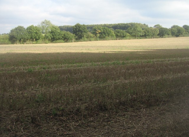 Field north of South Wood