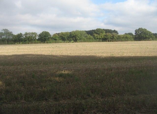 Field alongside South Wood
