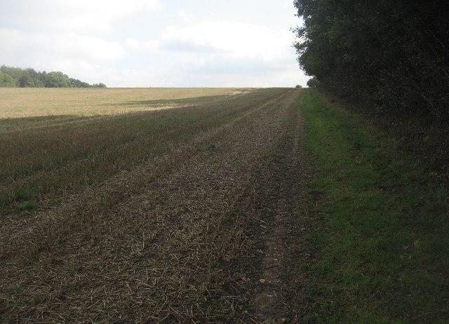 Path alongside South Wood