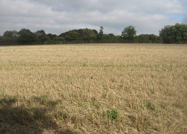 Post harvest stubble