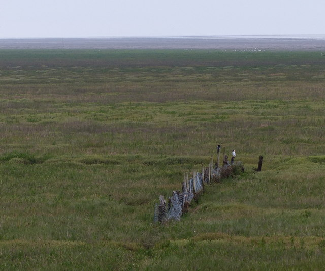 Old fencing on the salt marsh
