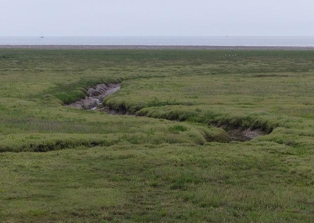 Tidal creek on the salt marsh
