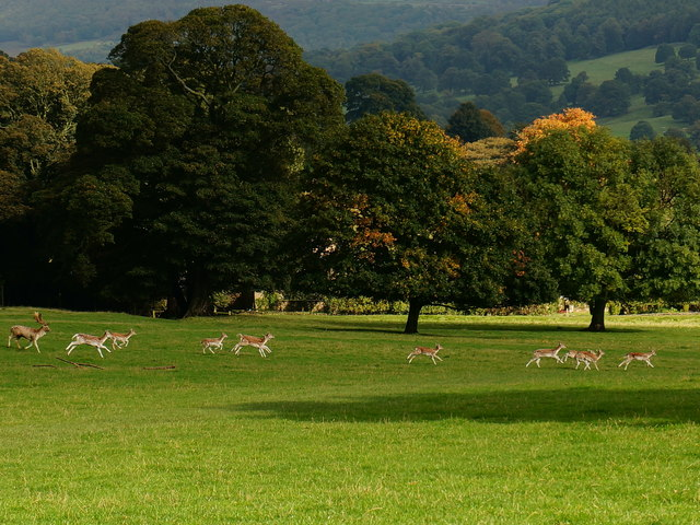 Deer roundup, Chatsworth