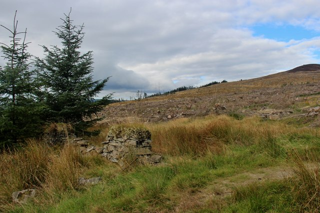 Forest clear-fell above Castle Toward