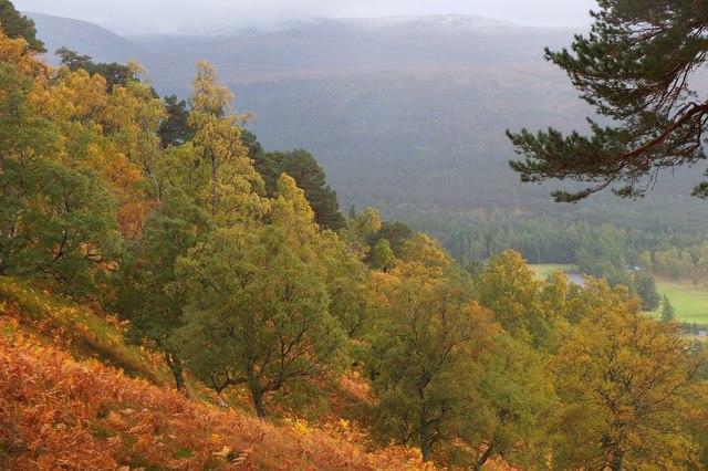 Autumn colours on Craig Leek, Invercauld