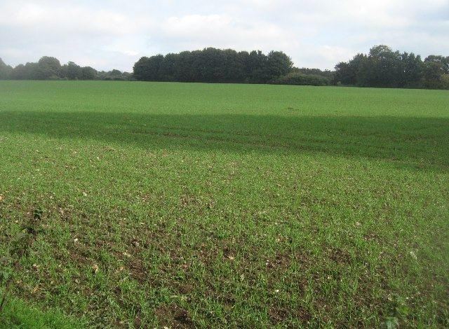 Field north of Southwood Farm
