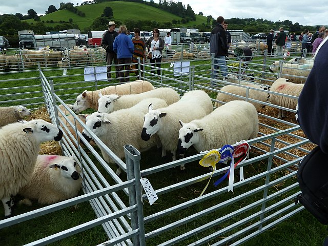 Sheep at Llanfair Show
