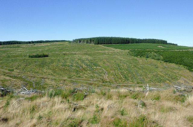 Forest on Esgair Cloddiad, Powys