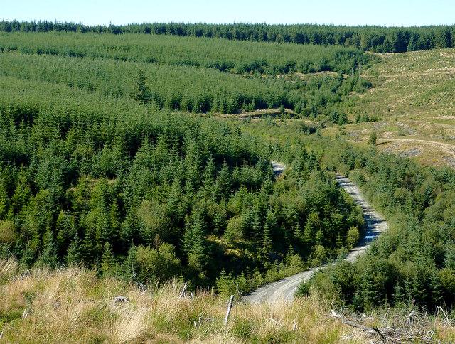 Forest in Cwm Nant y Cloddiad, Powys