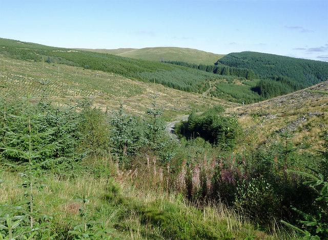 Forest plantation in Cwm Nant y Cloddiad, Powys