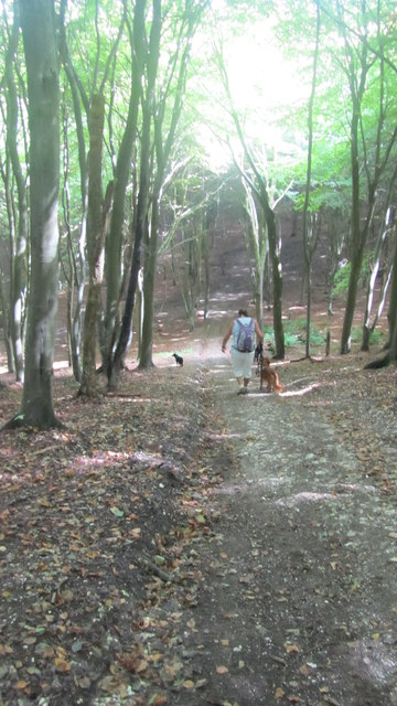 Steep hill in  Brighstone Forest
