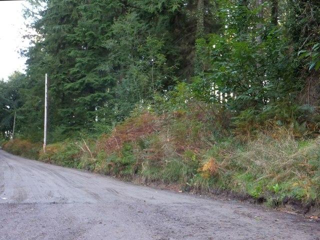 Bridleway in Flashdown Plantation