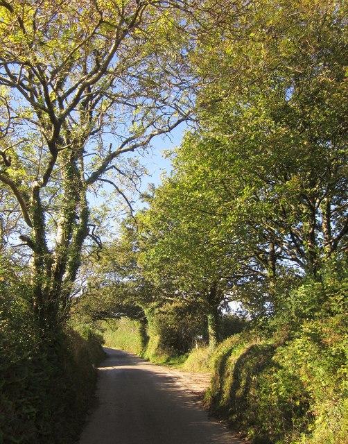 Lane to Blunts