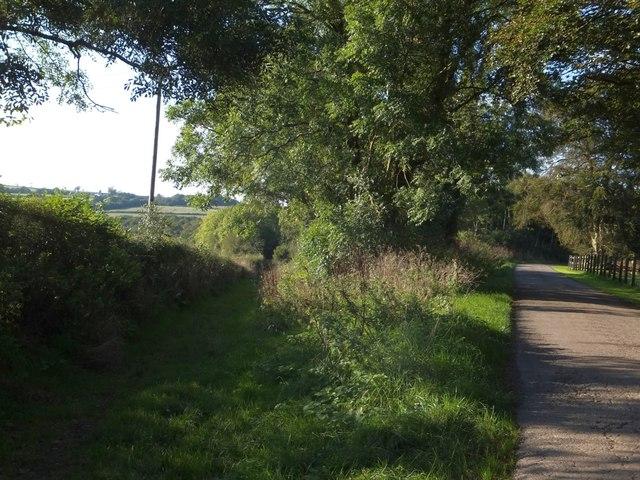 Footpath into Labdon Brake