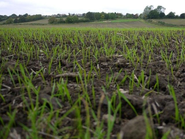 Arable field below Ovington