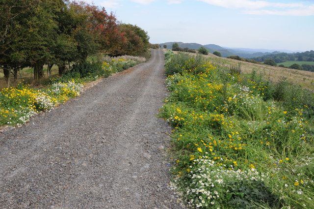 Public byway above the Vyrnwy valley