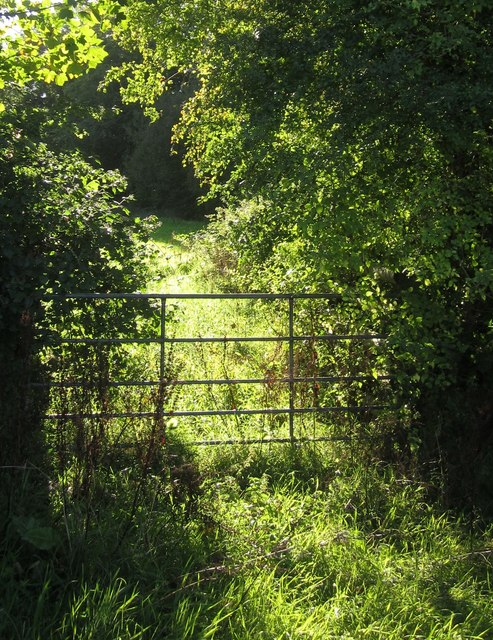 Gate near Foxhole Wood
