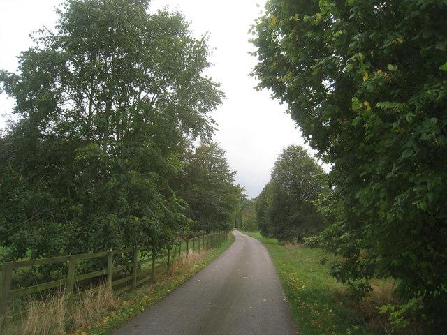 The approach to Dairy Farm, Saltmarshe