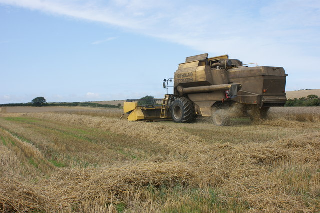 Harvesting wheat at Brawdy