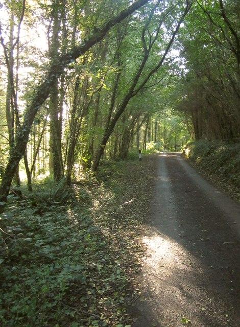Lane through Leigh Plantation