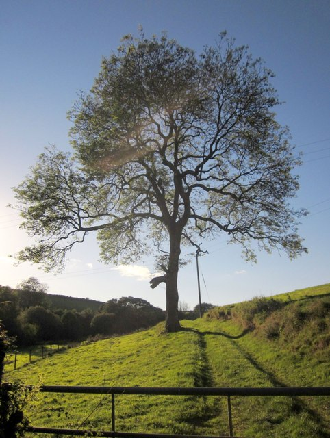 Tree below Brandispiece