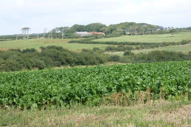 Farmland near Penycwm youth hostel