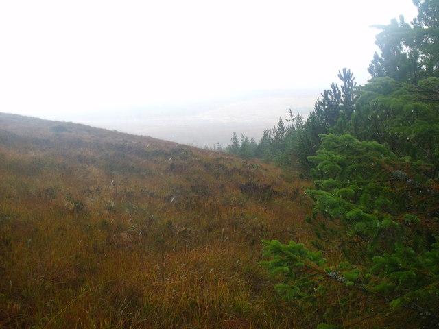 Forest edge on Sidhean na h-Iolarach north of Lairg