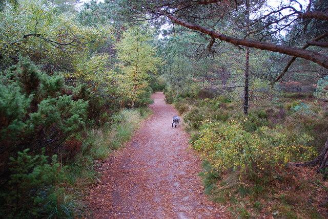 Footpath to Loch an Eilein
