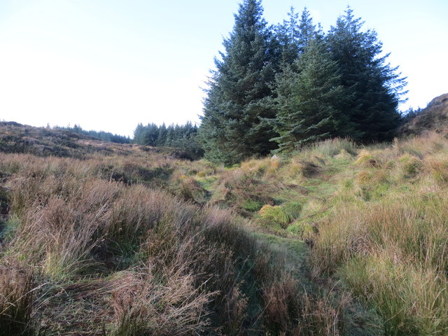 The course of a small unnamed burn in a forest firebreak