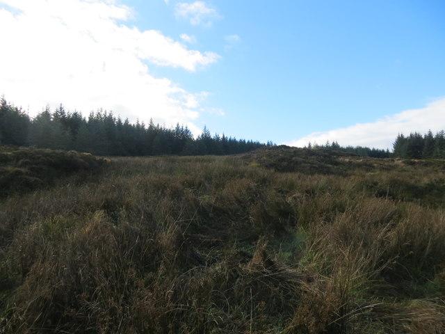 Firebreak in the forest below Cnoc nan Dearg