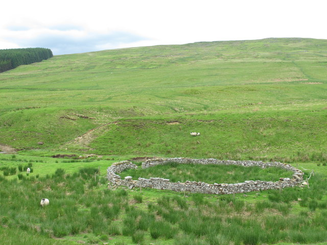 Sheepfold above Cottonshope Burn (2)