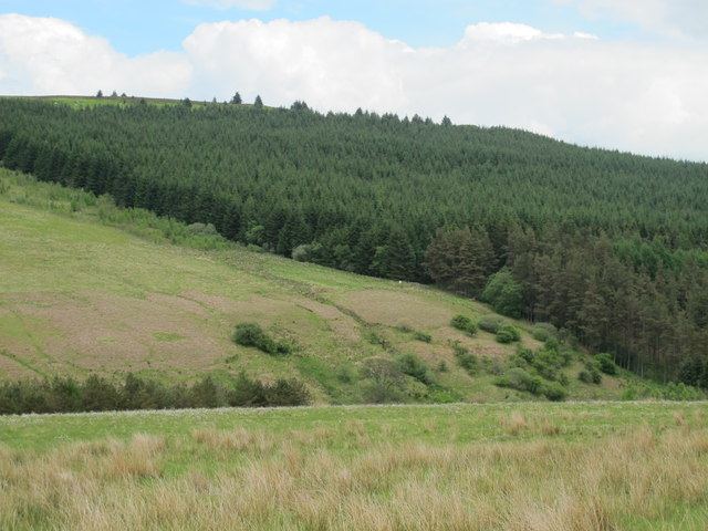 The valley of Cottonshope Burn and plantation below Dour Hill