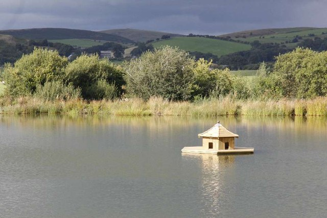 Duckhouse in the pond