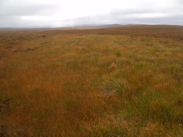A kind of lochan of grasses in a burncourse through boggy ground west of Crask Inn, Sutherland