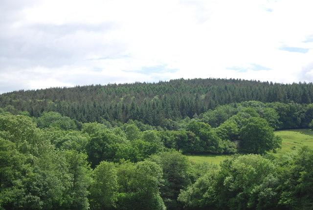 Dallington Forest