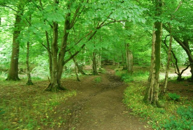 Path through Long Wood