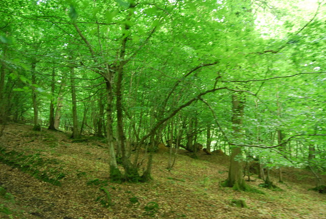 Long Wood