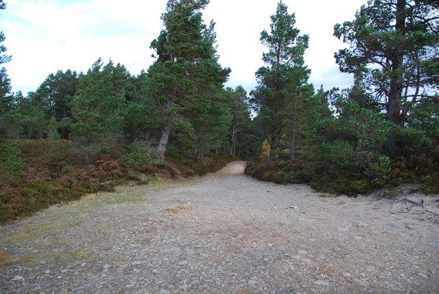 Entering Abernethy Forest