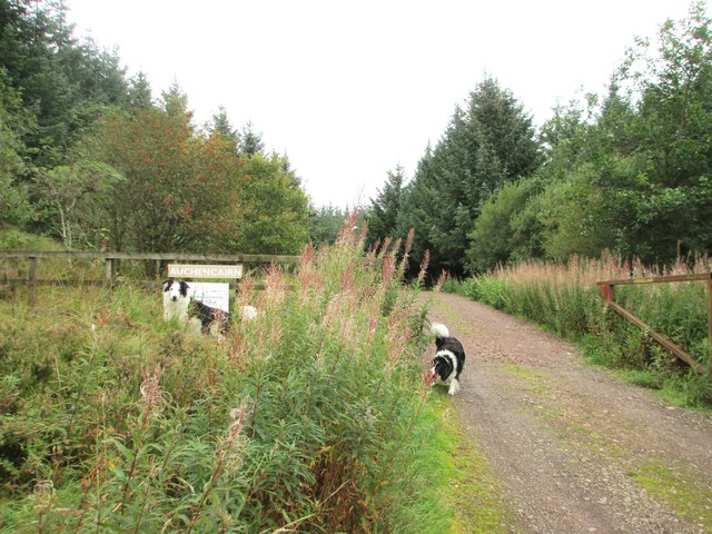 Border Collies at the entrance to Auchencairn Forest