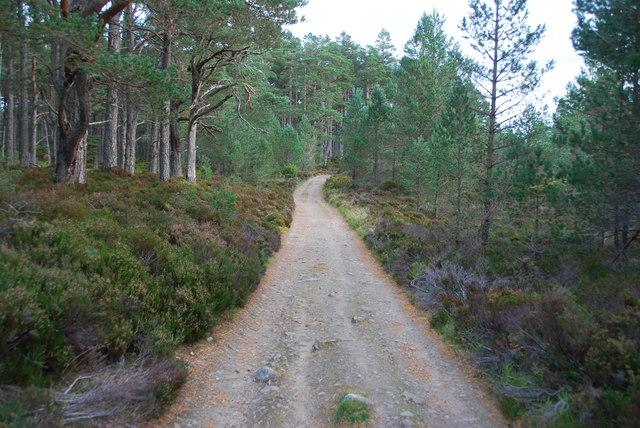 Track through Abernethy Forest