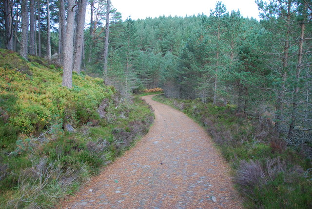 Winding track in Abernethy Forest