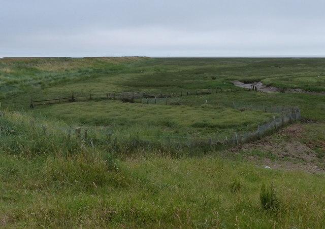 Fences on the salt marsh