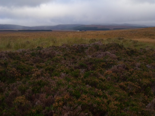 Dry bank with heather on the bealach between Cnoc an Alaskie and Cnoc an Fheor Mhaol near Crask Inn, Sutherland