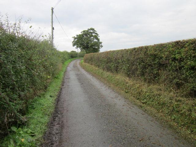 Narrow Lane at Ridleywood