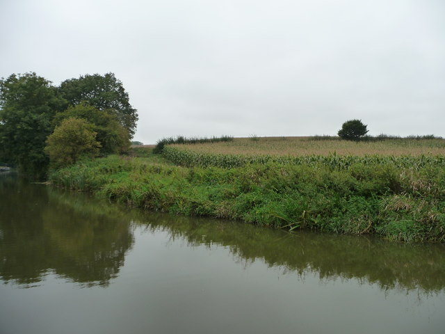 Edge of a canalside maize field