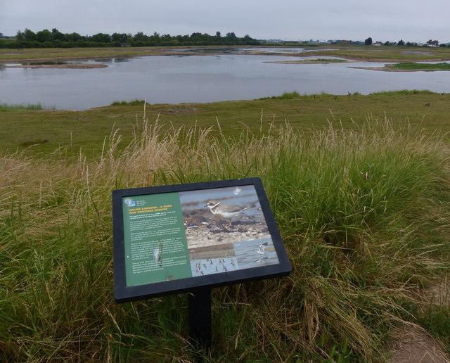 Saline lagoon at Freiston Shore Nature Reserve