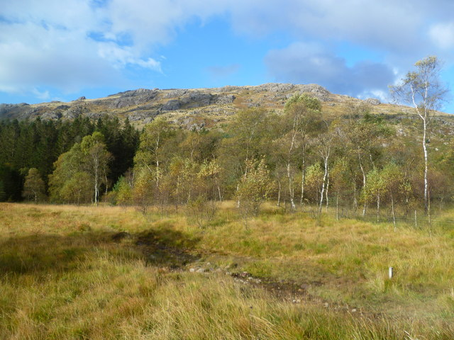Birches under Harter Fell