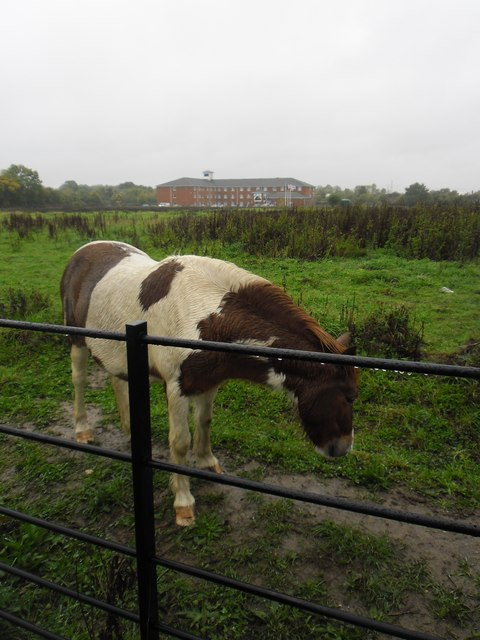 Horse in a field adjacent to Adanac Drive